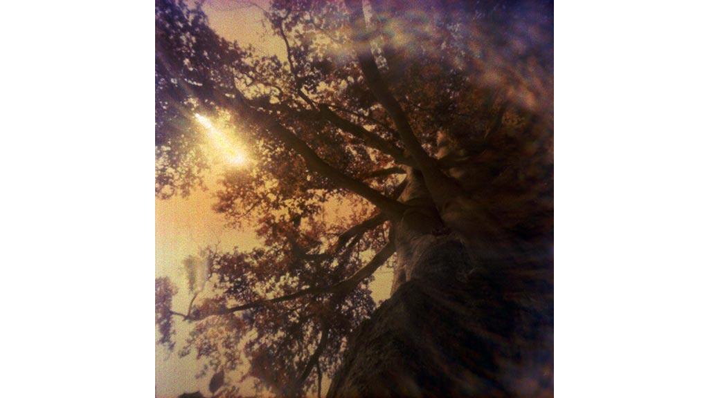 summer house paleis soestdijk old tree