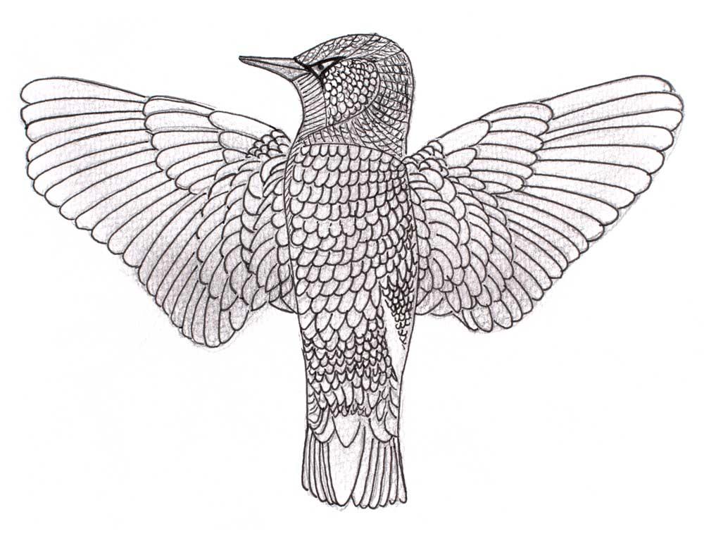 oene-van-geel-illustration-00005