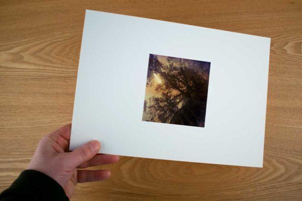 SH107_zon_en_boom_soestdijk_fine-art-print-72dpi_(c)-udo-prinsen